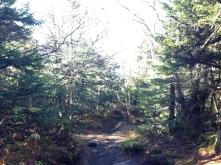 Cascade Porter Trail 2