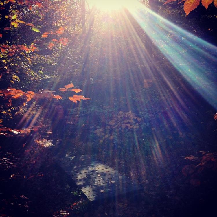 Cascade Porter Trail early sun