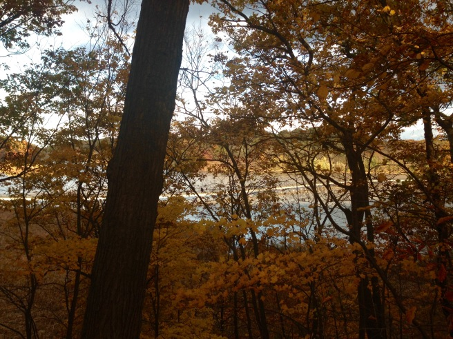 View of boardwalk over the Genesee River through trees.